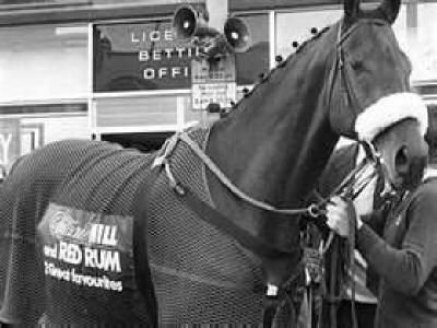 Red Rum won three Grand National steeplechases in Britain in 1973,1974 and 1977 and was second in this race in 1975 and 1976. Famous, he had a massive fan club and was much loved by millions of people all over the world. He was voted sports personality of the year in 1977. Red Rum's incredible record will NEVER be beaten.