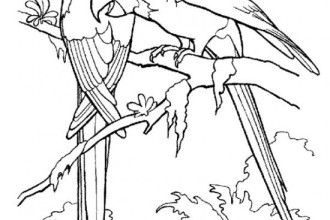 rainforest birds coloring pages 7 rainforest animals coloring pages in animal category