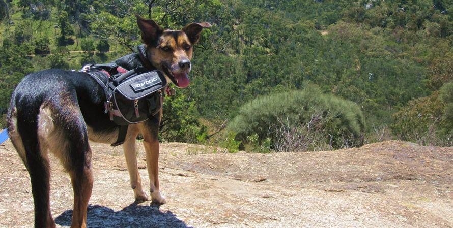 Ezydog Convert Harness And Saddlebags Dog Adventures Dog