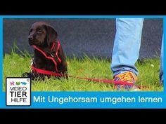 Hund Lernt Sich Am Menschen Zu Orientieren L Blickkontakt L Aufmerksamkeit Des Hundes L Hundekanal Youtube Hundchen Training Hunde Hundetraining