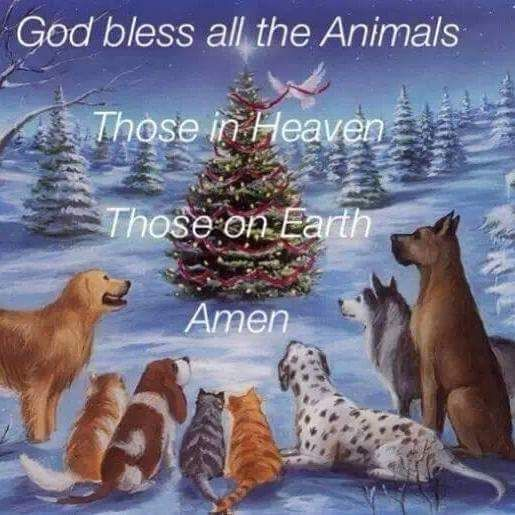 Prayer for all animals | Pets | Cute animals, Dogs, Animals
