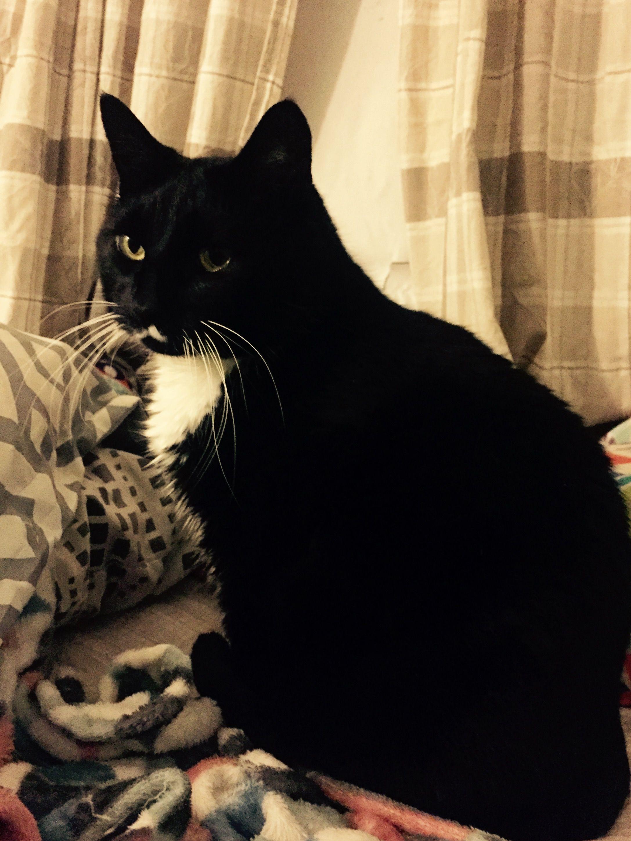 This is my cat Frodo http://ift.tt/2fXv2F2