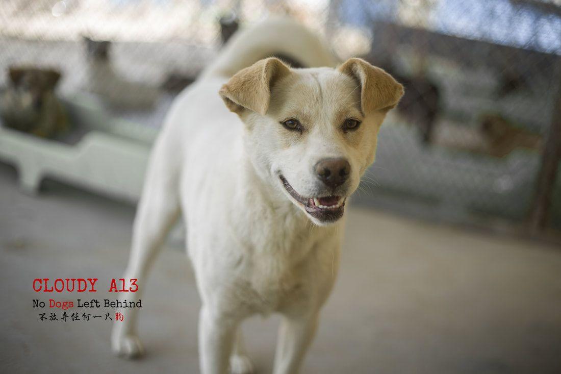 Picture Dogs, Dog photos, Dog adoption