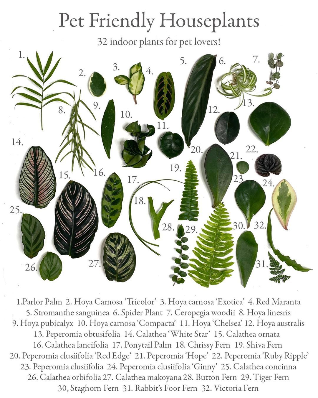 Planterina On Instagram Here Is A Leaf Chart Of All Of The Pet Friendly Plants We Have Or Will Have Very Soon On Plante In 2020 Plants Safe House Plants Plant Decor