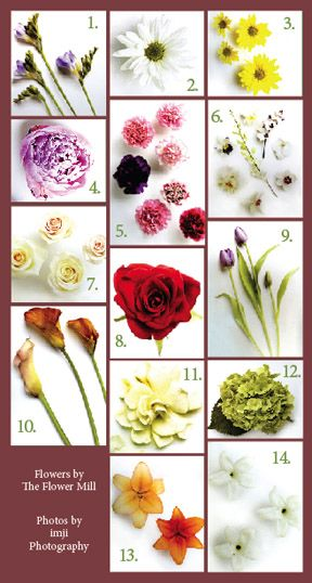 Image Search Results For Types Of Flowereanings