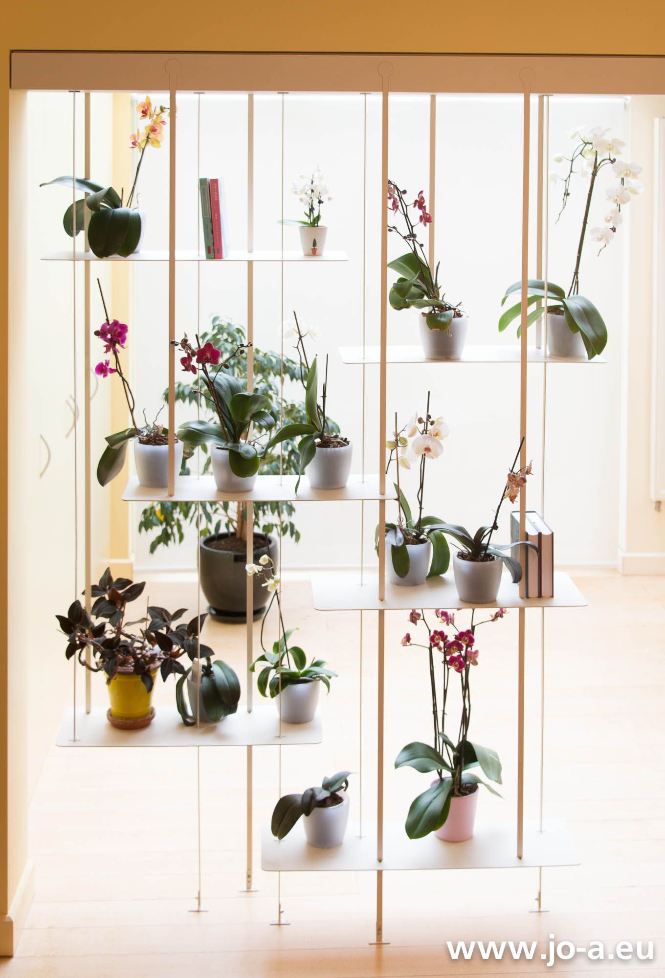 Un mur d 39 orchid es une suspension jo a orchidaceae for Suspension pour plante interieur