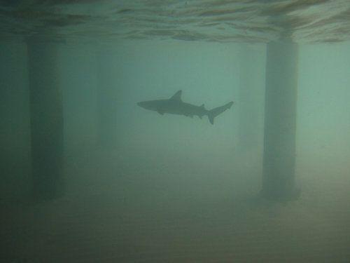 storms comin | Dreamworld 121 | Great white shark, Sharkboy