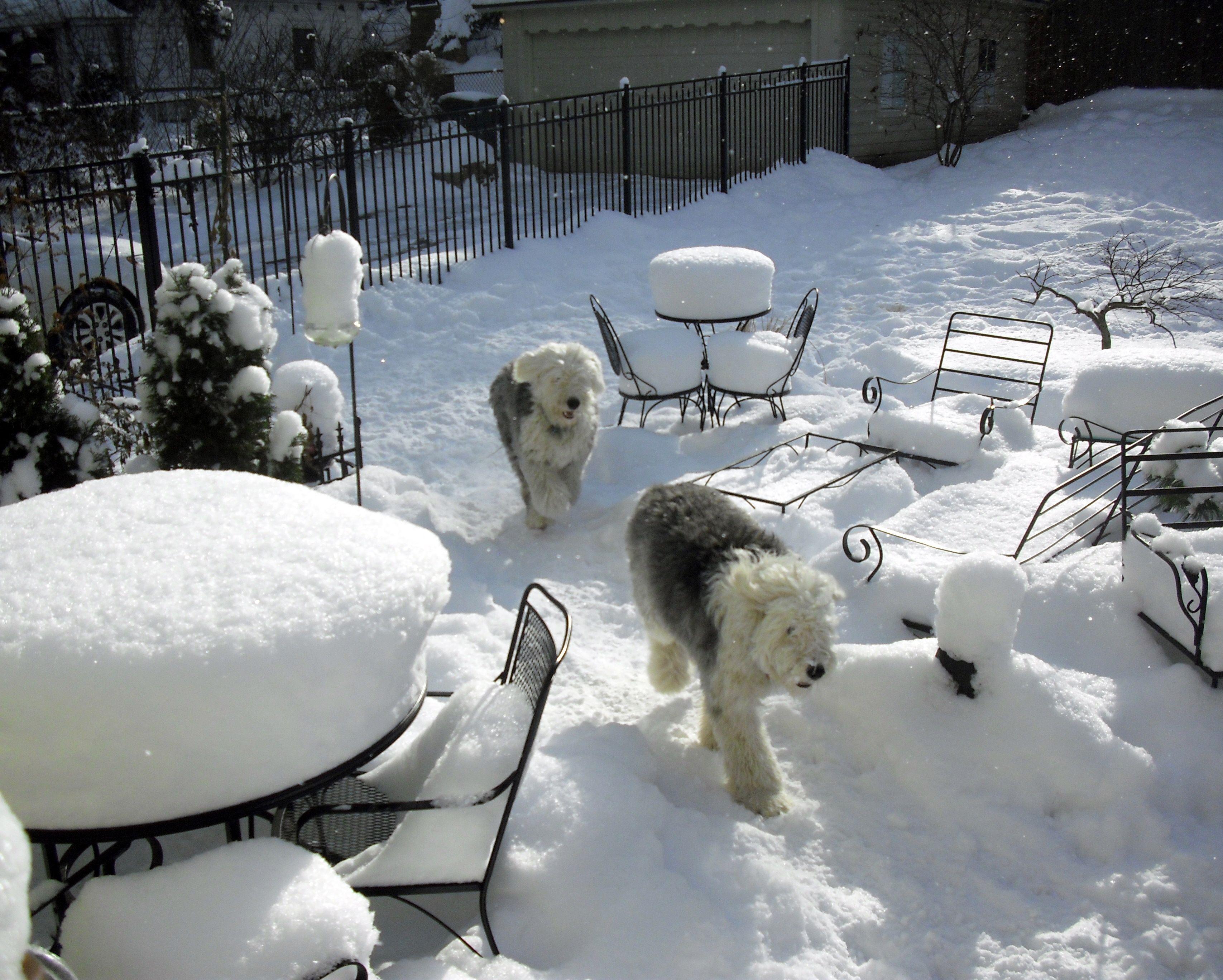 sunny snow dogs