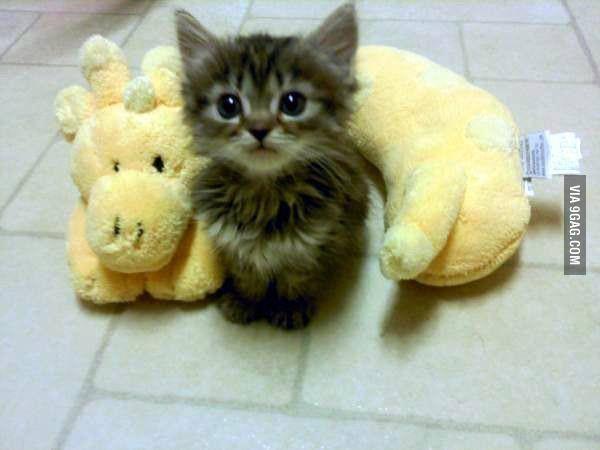 Can I Keep the Giraffe?