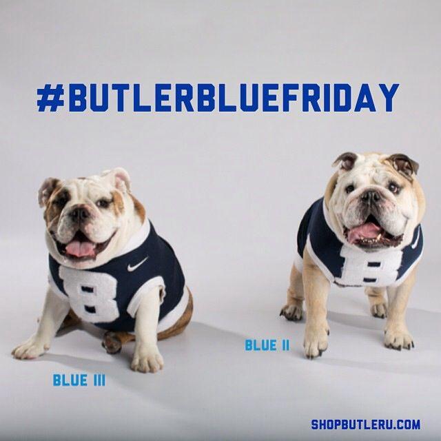 Butler Bulldogs Bulldog Butler Bulldogs