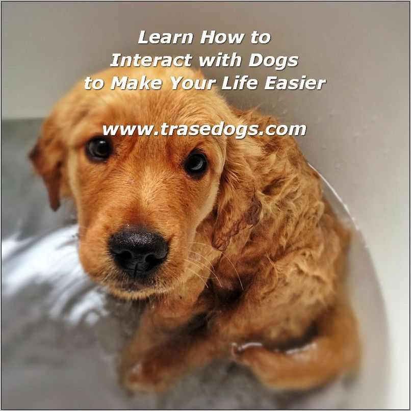 How To Interact With Dogs Read More At The Image Link