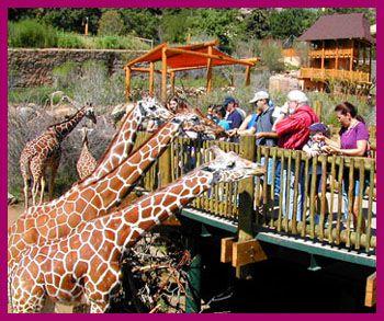 Cheyenne Mountain Zoo... giraffe crackers... you can just buy a few....