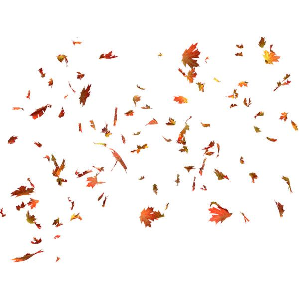 Yandeks Fotki Liked On Polyvore Featuring Backgrounds Fillers Autumn Fall And Flowers Leaf Images Autumn Leaves Fall Leaves Png