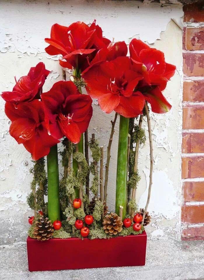 Christmas no l art floral moderne pinterest no l for Oignon amaryllis