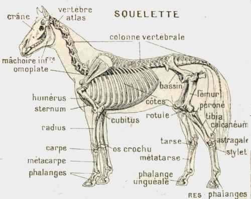 Super hippologie en image! | Squelette cheval | Pinterest | Squelette CZ31