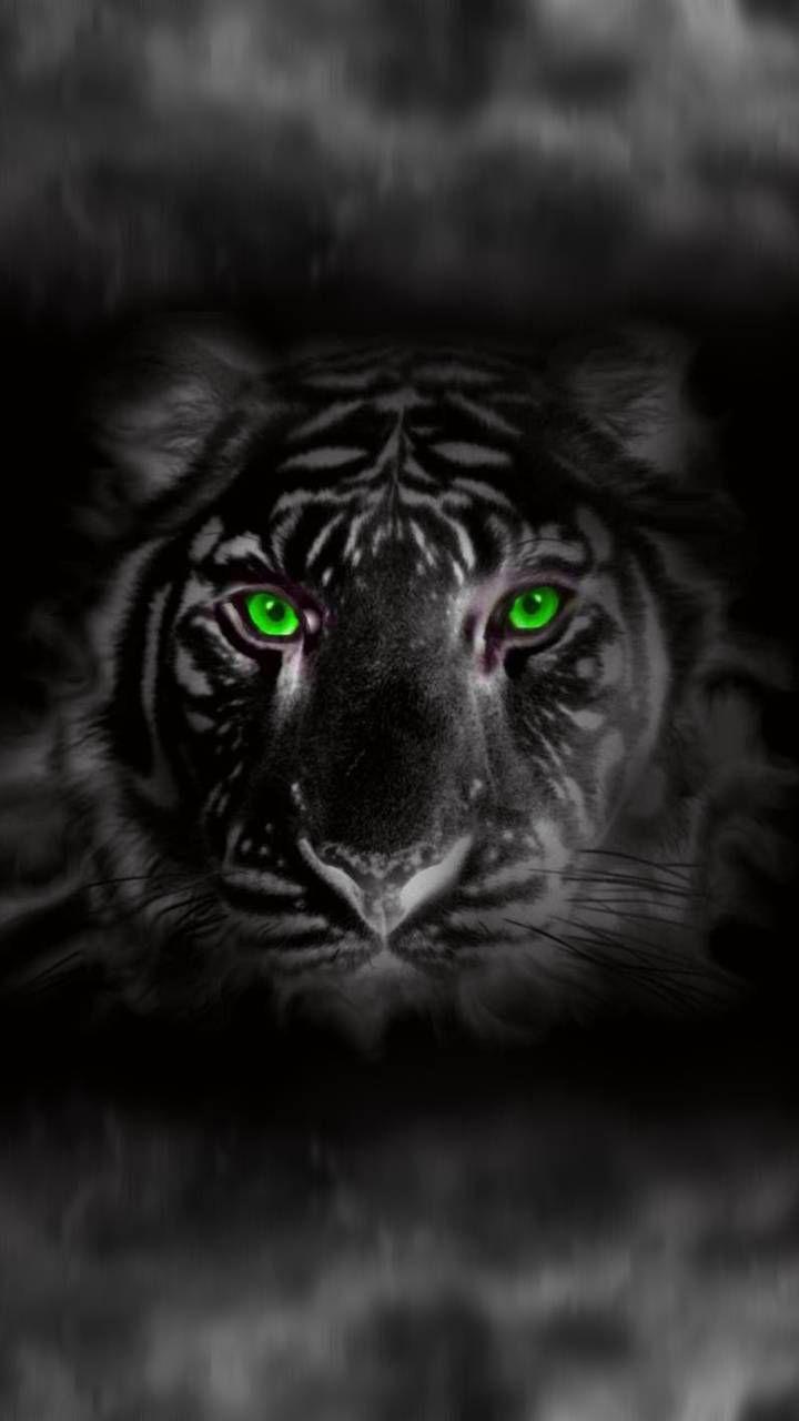 2160x3840 Tiger Glowing Red Eye Minimal Dark Wallpaper Jaguar Animal Black Panther Hd Wallpaper Animal Wallpaper