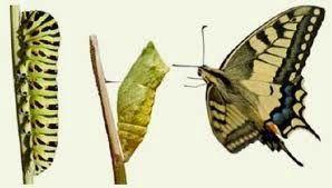 Transformando o ser: Transformando o ser