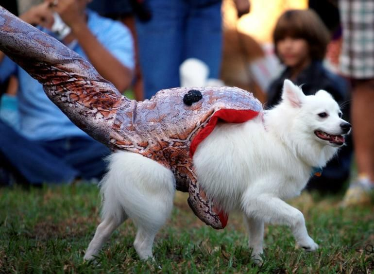Best do it yourself halloween costumes for pets doggie dog best do it yourself halloween costumes solutioingenieria Images