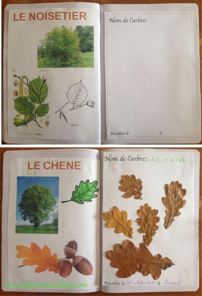Diy vive la for t fabrique ton herbier activit carnet d 39 automne herbier for t et carnets - Activite automne maternelle ...