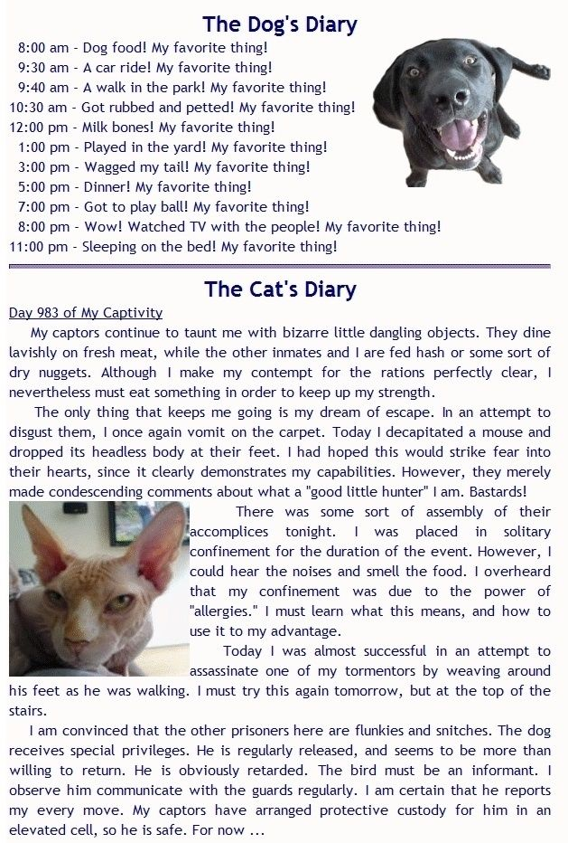 Dog And Cat Diaries Cat diary, Funny, Cat vs dog
