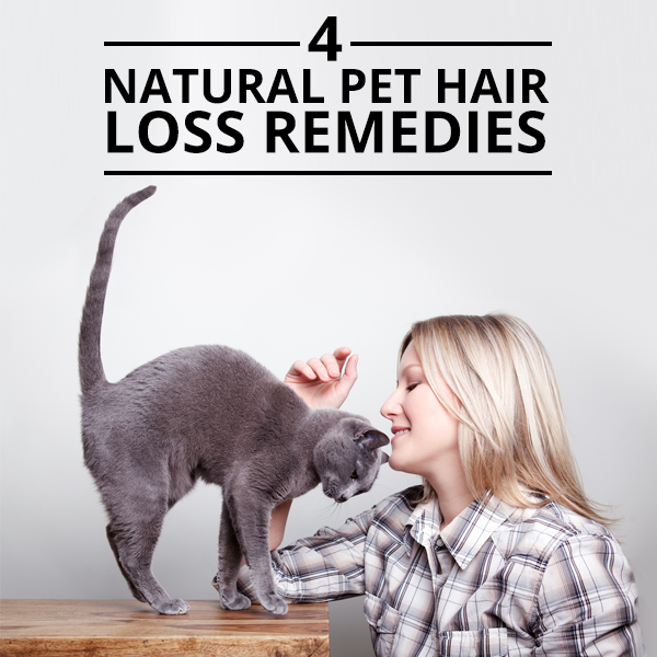 4 Natural Pet Hair Loss Remedies. These are so simple and