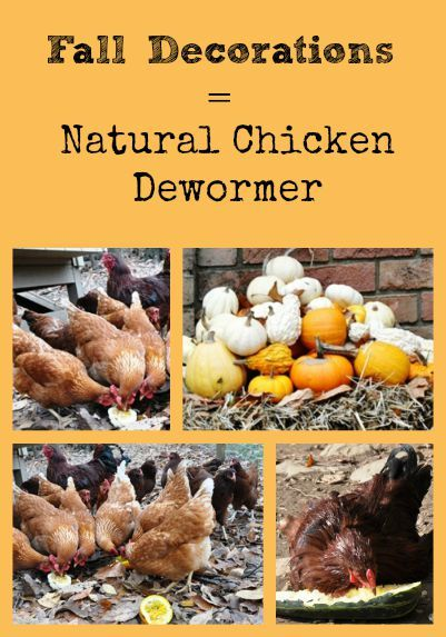 Fall Decorations Are Natural Chicken Dewormers Chickens Chickens