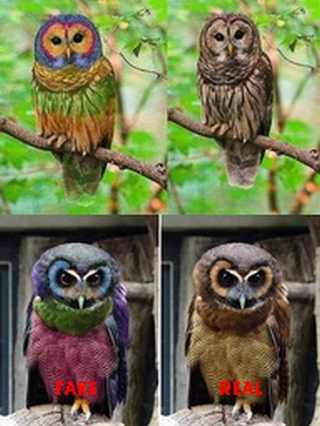 Faux creatures ~The Owls on the Left Don't Exist. They are Photoshopped versions of the Real Owls on the Right.