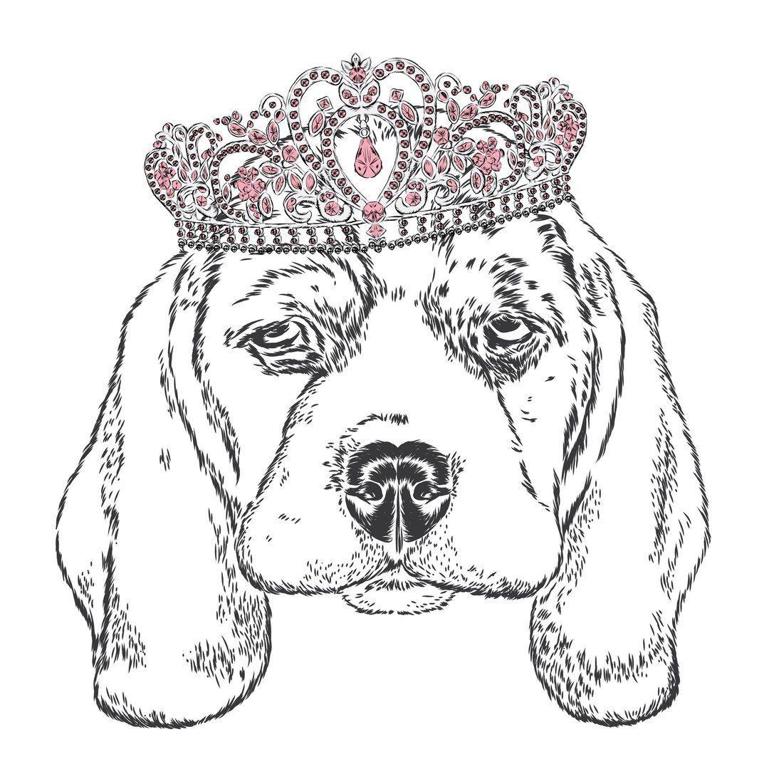 собака, корона | Собаки, Рисунки, Картинки