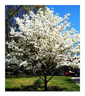 Choice landscaping garden center trees tree connection choice landscaping garden center trees tree connection pinterest mightylinksfo Gallery