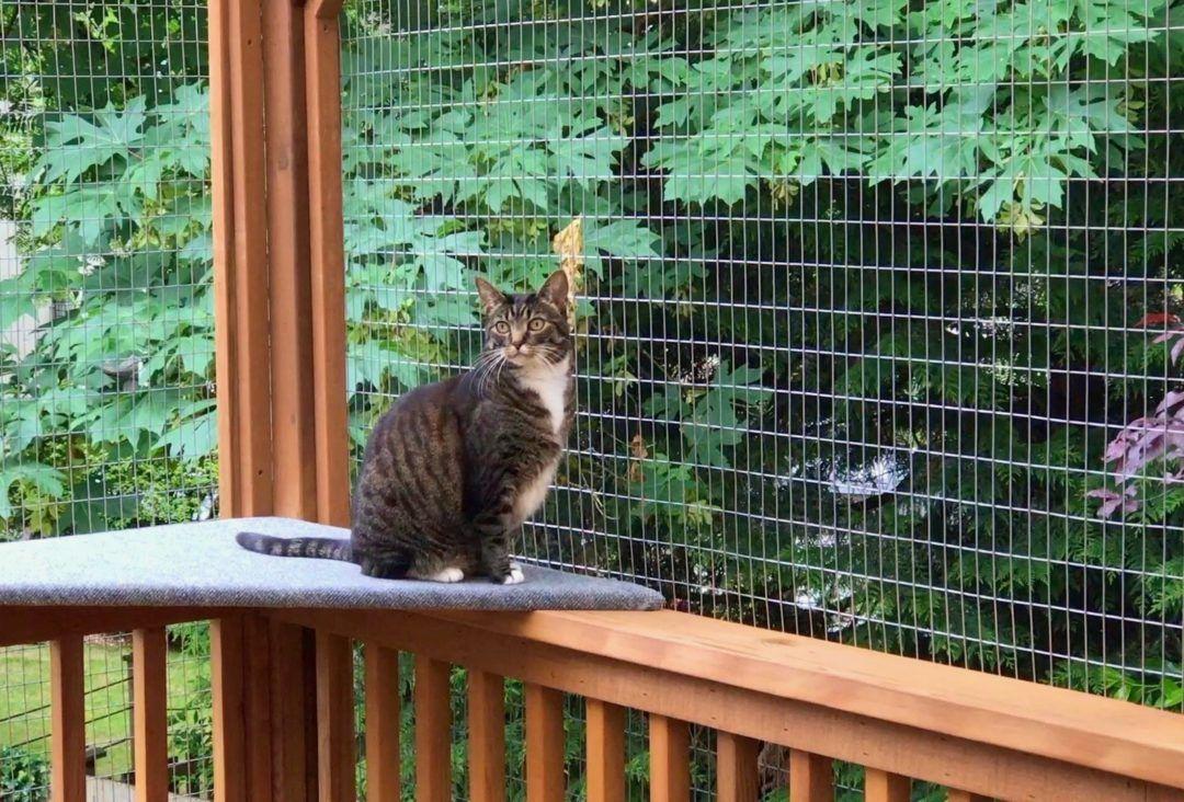 DIY Catio Materials How to Pick the Right Cat Enclosure