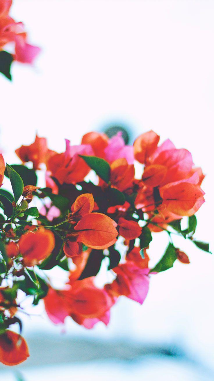 Beautiful Iphone Pinterest Backgrounds Flower Wallpaper Hd