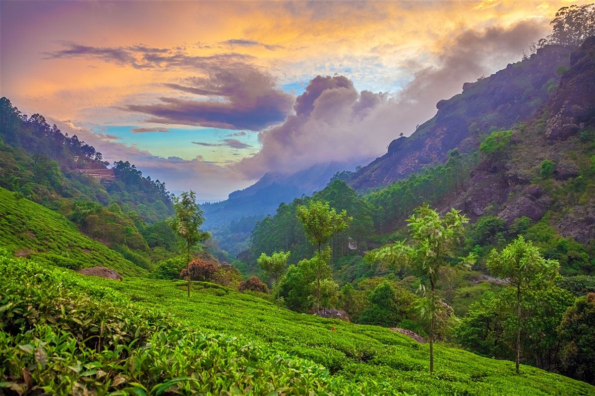 Explore Munnar holidays and discover the best time and