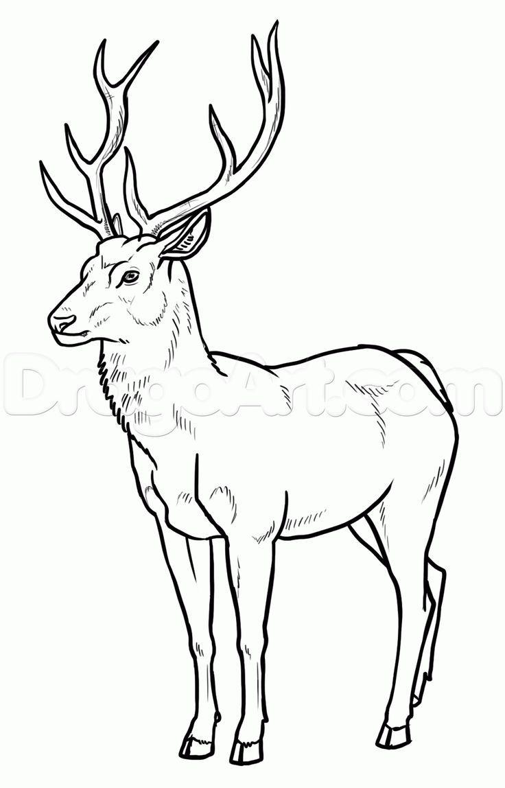 How To Draw Deer by makangeni | Deer drawing, Animal ...