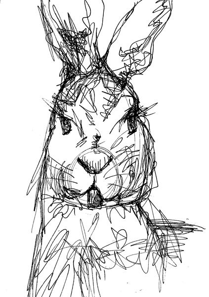 Line Drawing Rabbit : Rabbit symbolism pinterest drawings and