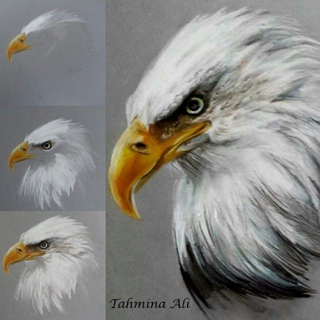 """#tahminaart on Instagram: """"Quick drawing of an eagle :) first time in ages I've drawn an animal ! Hope you like the step by step #art #drawing #eagle #animal #colour…"""""""