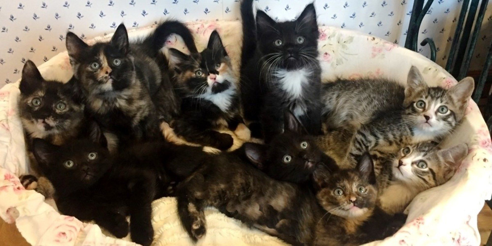 A Very Skinny Stray Cat Was Found Trying To Feed Her Nine Hungry Kittens On The Streets Even Though She Didn T Have Food For Herself Baby Cats Kittens Teacup Cats