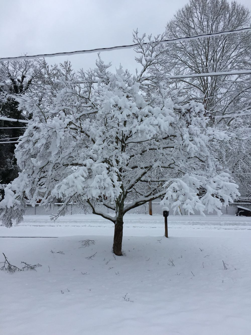 2.26.2015 a tree in mothers front yard