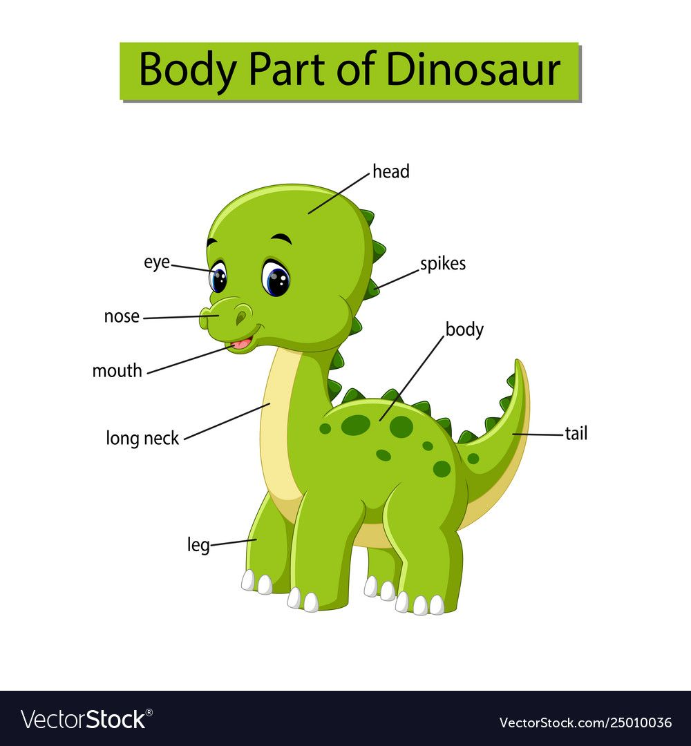 Pin On Body Part Of Animals