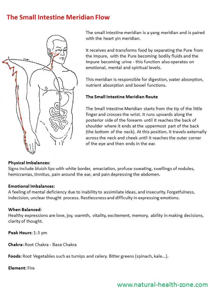 Small Intestine Meridian Energy medicine, Meridian