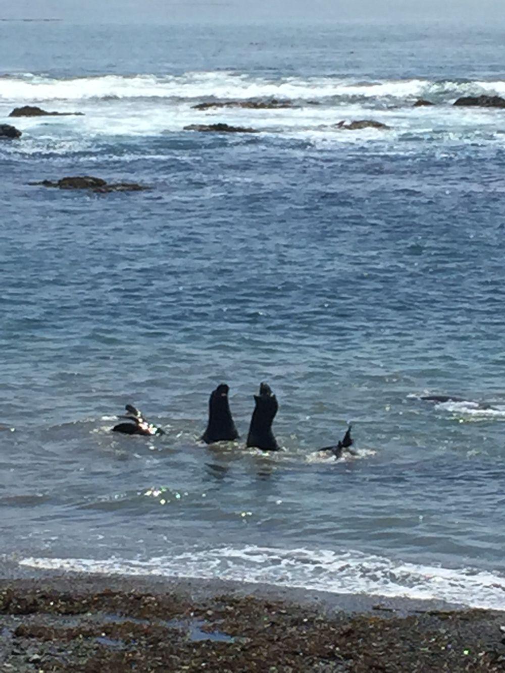 Elephant Seals July 2015 California