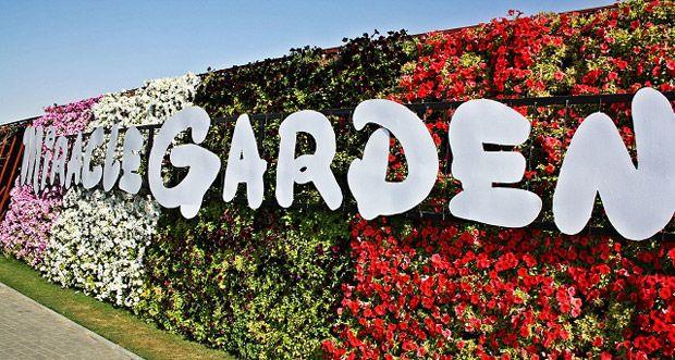 Miracle Garden: el jardín de flores más grande y colorido del mundo #Sustentable #MundoVerde