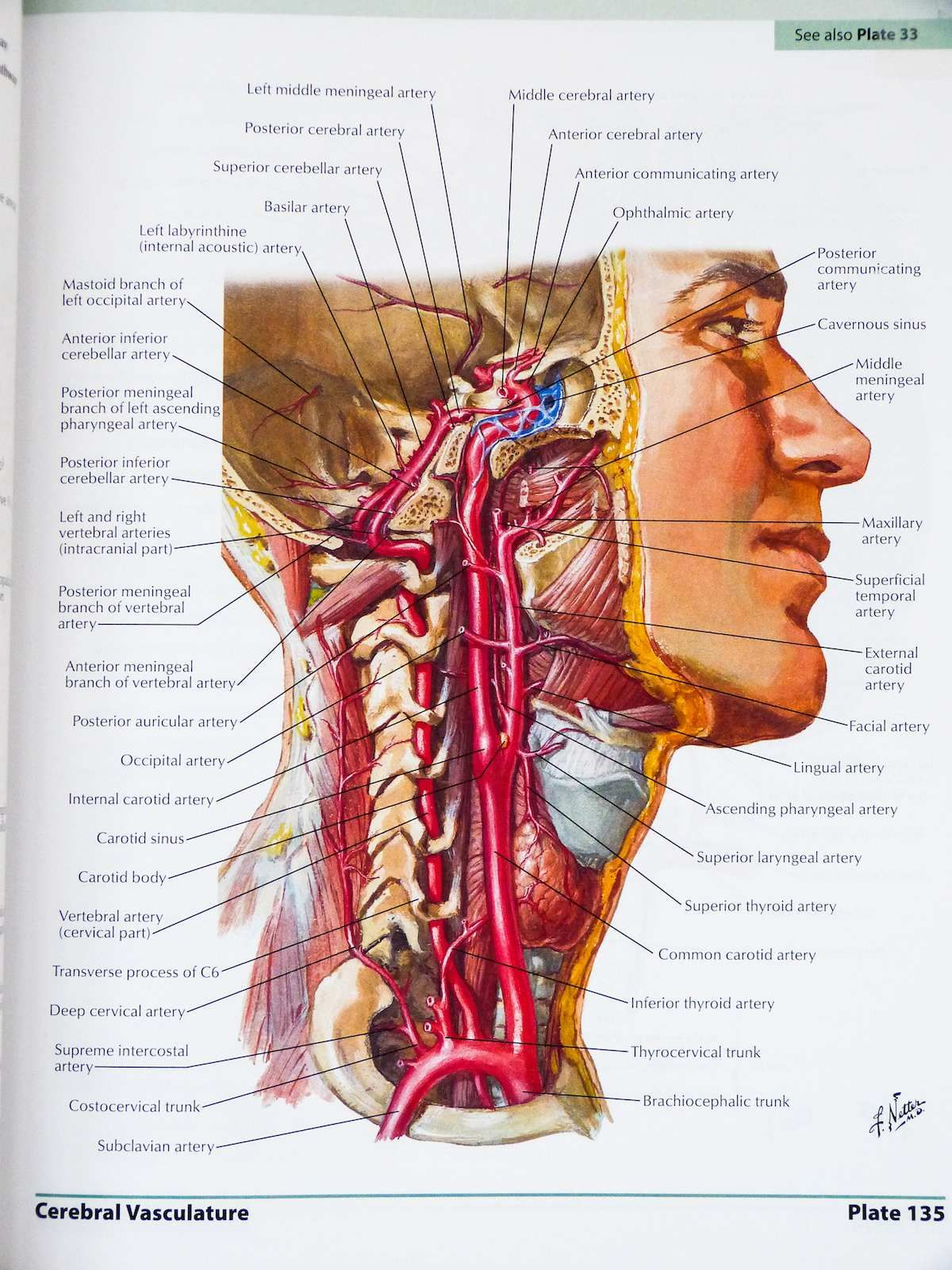 The Best Atlas Of Human Anatomy There Is Boing Boing Health