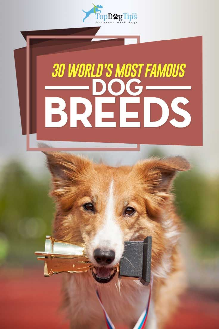 30 Most Popular Dog Breeds Known All Over The World Cute Cats