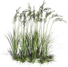 Image Result For Png Water Plants Photoshop Nature Landscape Landscape Design