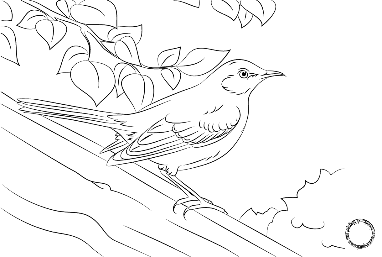 Gambar Mewarnai Burung Mockingbird Untuk Anak