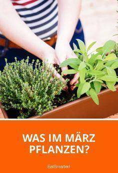Was Im März Pflanzen Gartenanbau Balcony Garden Vegetable