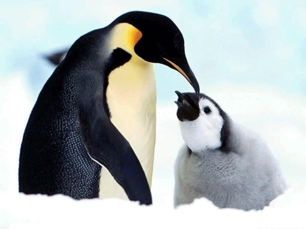 Penguin Love For Baby
