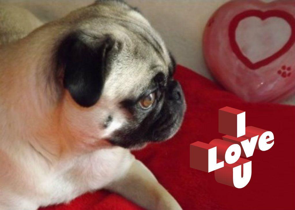 Pug Valentine PUG VALENTINE CARDS Pinterest – Pug Valentine Cards