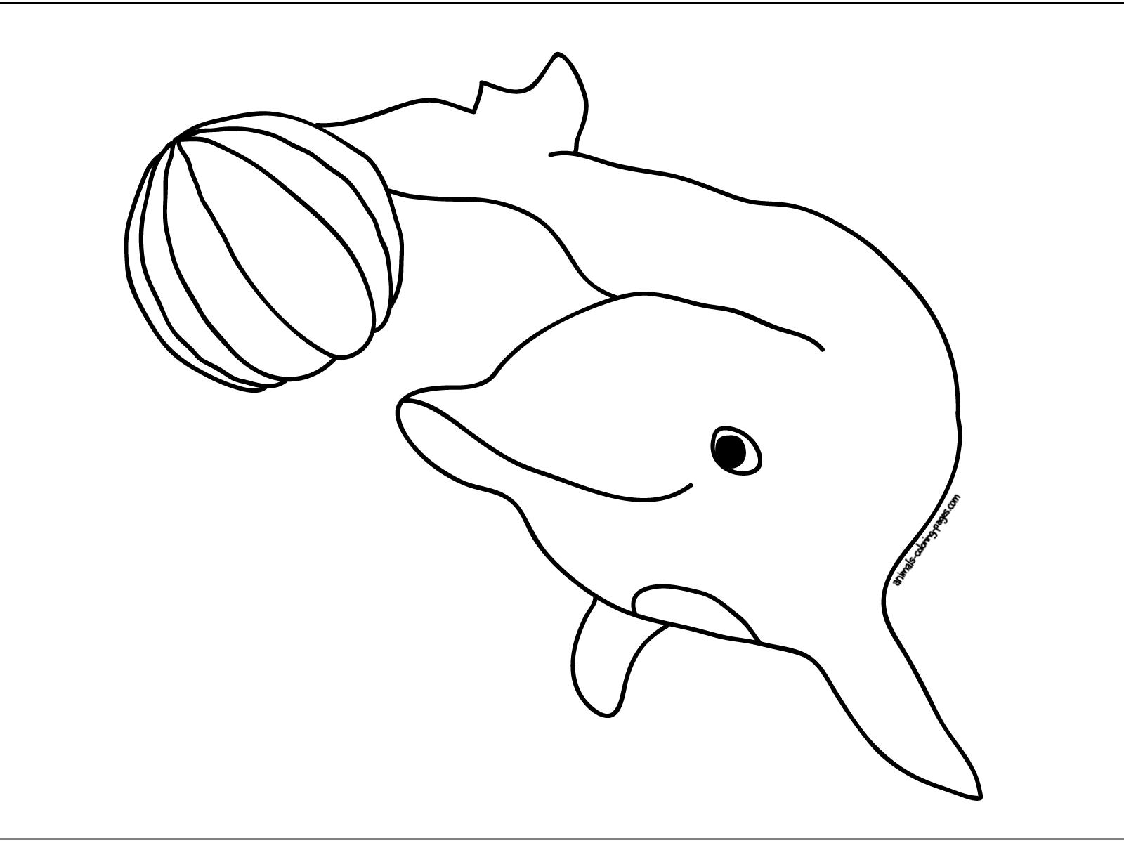 Cute Dolphin Jump Colour Drawing Hd Wallpaper