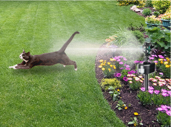 Keep Cats And Dogs Out Of Your Garden With Motion Detector Water Sprayer.